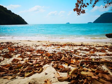 The leaves fall on the beach