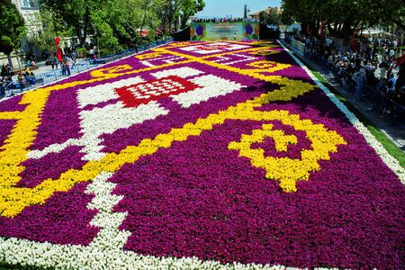 multicolor carpet of live tulips in Istanbul 스톡 콘텐츠