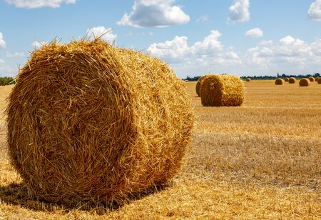 big bales of straw on the harvested field