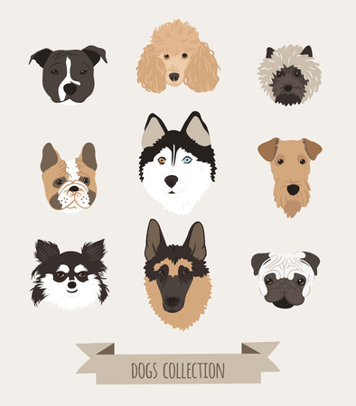 Set of different dogs head drawn in cartoon style.  Inscriptions on a gray background.