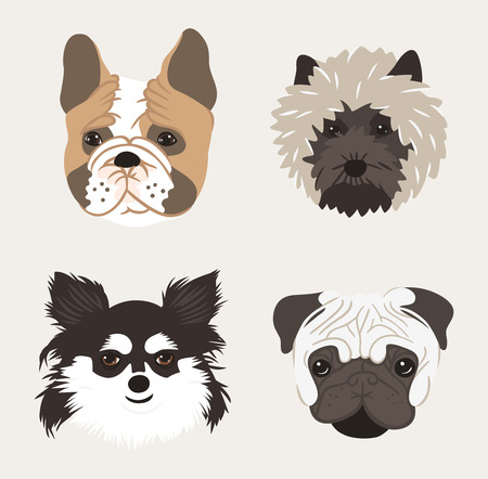 petshop: Dogs set for pet-shop. The dogs head drawn in cartoon style on white background.