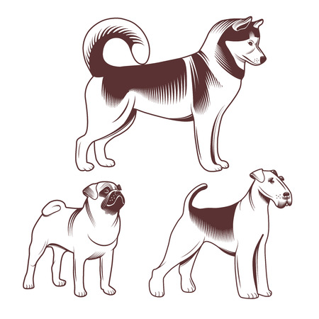 petshop: Dogs set for pet-shop. Dogs profile drawn in cartoon style.