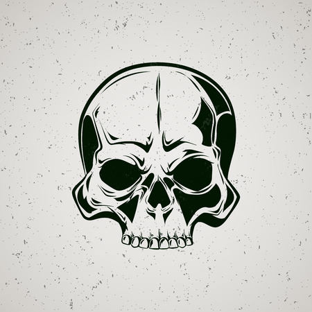 sapiens: Skull grunge. Graphic painted skull on a grey background.