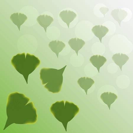 oxidant: Ginkgo Biloba leaves green background