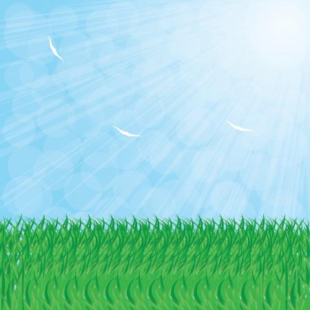 Illustration Of Summer Grass, Vector Illustration Stock Vector - 18577473