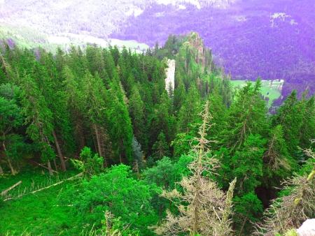 Alpine mountain scenery with fir tree. photo