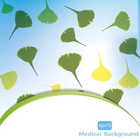 Leaves of ginkgo biloba. Vector  Ilustração
