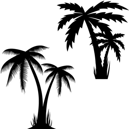 Vector illustration of palm trees .vector