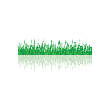 sedge: Green grass, vector  Illustration