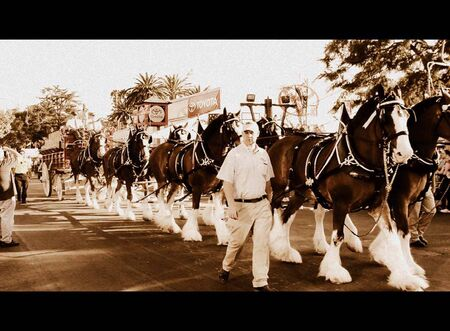 clydesdale: Parade