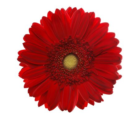 Red gerbera head, closeup shot, isolated on a white background