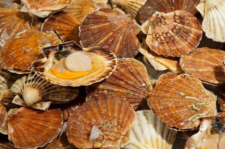 Fresh scallops at the food market counter photo