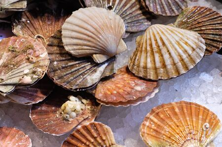 Fresh scallops at the food market counter