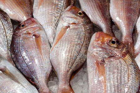 Fresh fish at the food market counter photo