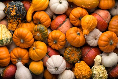 Textures: a lot of multicolor pumpkins, seasonal autumn decorative