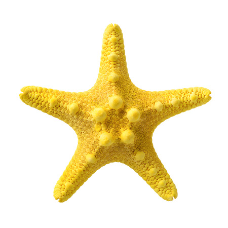 Isolated objects: yellow starfish, isolated on white background, closeup shot 写真素材
