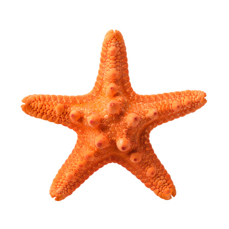 Isolated objects: orange starfish, isolated on white background, closeup shot
