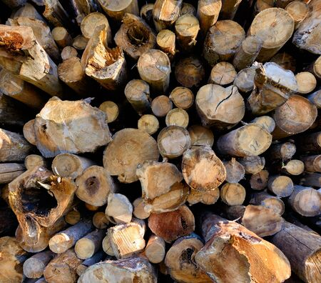 timber harvesting: Backgrounds and textures: stack of wood, timber industry or nature abstract background Stock Photo