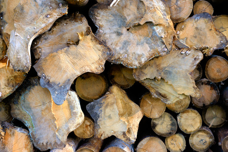 timber industry: Backgrounds and textures: stack of wood, timber industry or nature abstract background Stock Photo