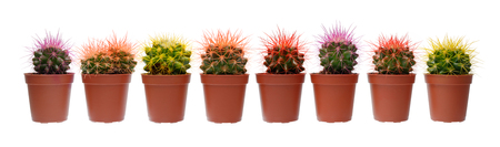 group of plants: Plants and flowers: group of cactuses, arranged in line, close-up shot, isolated on white background
