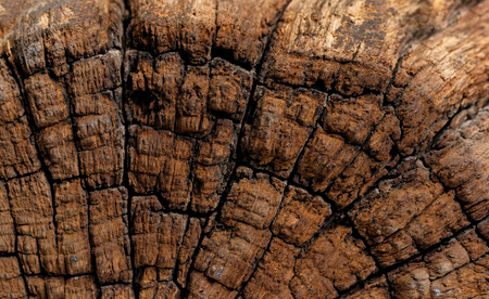 Backgrounds and textures: rough antique wooden stump surface, natural abstract Stock Photo