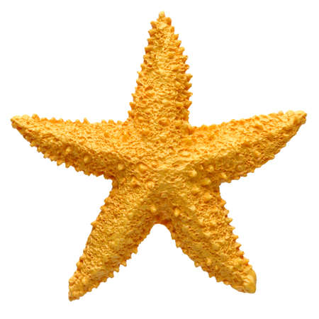 Yellow starfish souvenir, handmade decoration, isolated on white background