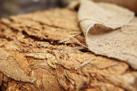 Photo of dried tobacco leaves in cloth sack for cigarette industry.