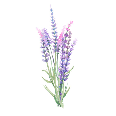 Bouquet of lavender painted with watercolors on a white background 写真素材