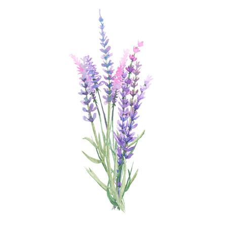 白い背景に水彩で描かれたラベンダーの花束