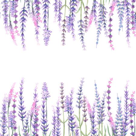 fiori di lavanda: Telaio con lavanda dipinto con acquerelli su sfondo bianco, decorazione cartolina o invito
