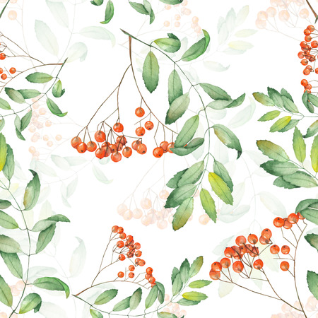 viburnum: Seamless pattern of rowan painted in watercolor on a white background