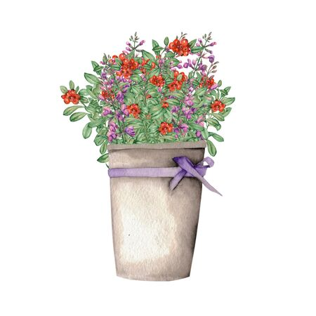 salvia: Salvia and cowberry in a bucket with a purple bow painted in watercolor on a white background