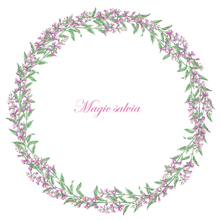 salvia: Wreath of salvia painted in watercolor on a white background; frame, decoration postcard or invitation for wedding, celebration, holiday