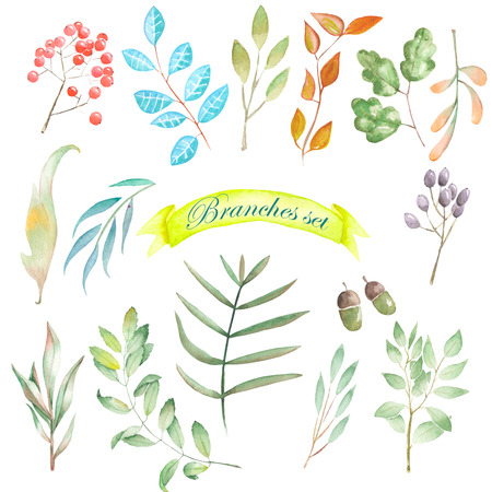 trees illustration: Set, collection of floral elements, branches and leaves, painted in watercolor on a white background