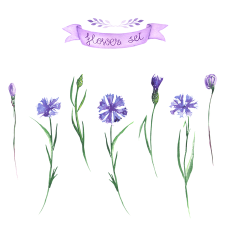 Set, collection of floral cornflowers decor elements for floral decorative ornament, painted in watercolor on a white background Stock Photo