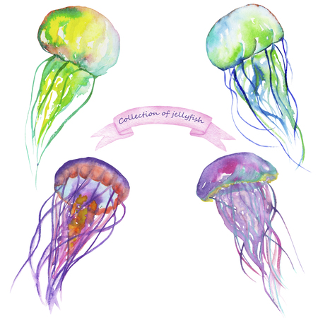 blubber: Set with a samples of jellyfish painted in watercolor on a white background