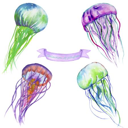 Sertie d'un échantillons de méduses peintes à l'aquarelle sur un fond blanc Banque d'images