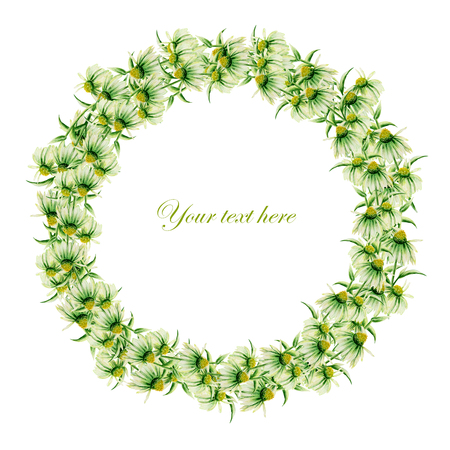 daisy wheel: Template of postcard, frame border wreath with green camomiles painted in watercolor on a white background, decoration postcard, greeting card or invitation