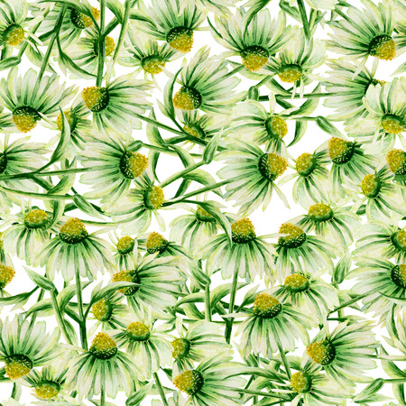 daisy wheel: Seamless pattern with green camomiles painted in watercolor on a white background