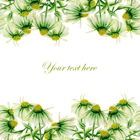 chamomel: Template of postcard, frame border with green camomiles painted in watercolor on a white background, decoration postcard, greeting card or invitation
