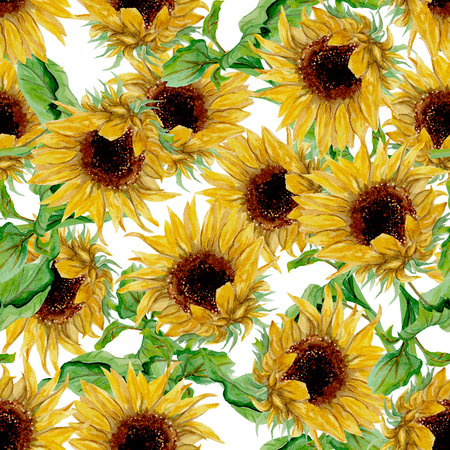 Seamless pattern with yellow sunflowers painted in watercolor on a white background