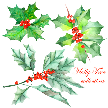 Collection set with isolated Christmas branches of holly tree the branches with the red berries and green leaves painted in watercolor on a white background