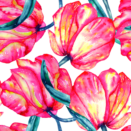 incarnadine: A seamless pattern with the watercolor crimson and scarlet tulips on a white background