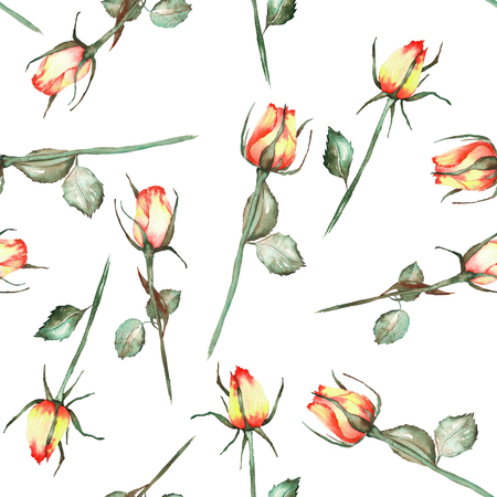 incarnadine: A seamless pattern with the watercolor beautiful red and yellow roses painted on a white background