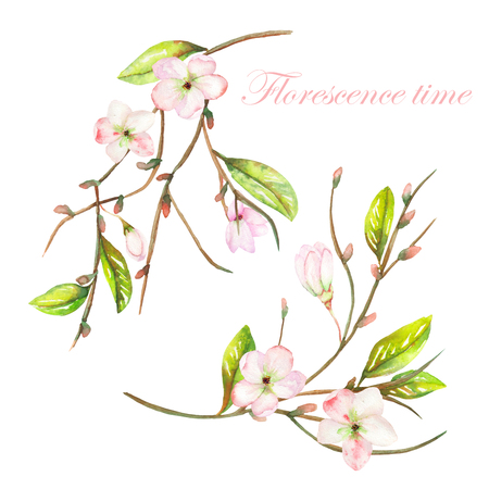 apricot tree: An illustration with an isolated tender pink blooming flowers on the branches with the green leaves painted in watercolor on a white background Stock Photo