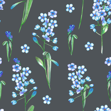 florescence: Seamless floral pattern with the small blue flowers of forget-me-not Myosotis, painted in a watercolor on a dark background