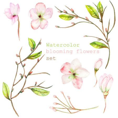 rama: Un conjunto con los elementos decorativos florales aisladas en la forma de la acuarela floración flores, hojas y ramas con las yemas para una boda u otra decoración