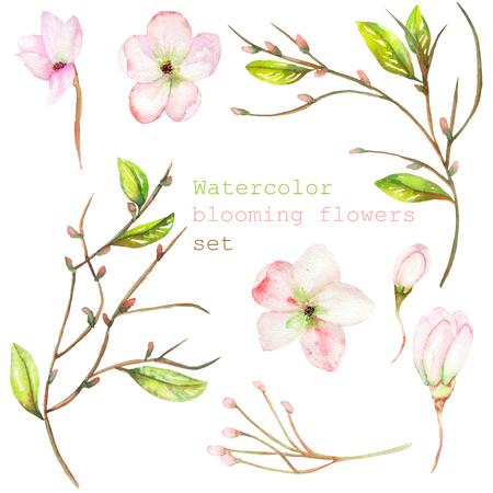 Un insieme con gli elementi decorativi floreali isolati in forma di acquerello fioritura fiori, foglie e rami con le gemme per un matrimonio o altre decorazioni Archivio Fotografico