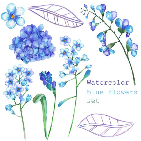 Un insieme con gli elementi floreali isolati in forma di acquerelli blu fiori, fiori che sbocciano Ortensia, Myosotis su uno sfondo bianco per una decorazione