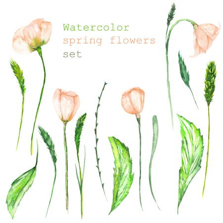 장식 꽃과 흰색 배경에 작은 이삭 피는 수채화 봄 분홍색 꽃의 형태로 고립 된 꽃 요소 집합